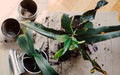 5 Reasons Why Houseplants Still Die in My Care