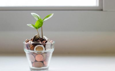 Why are Houseplant Prices So High in 2020?