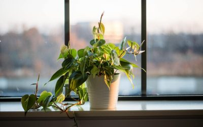 How to Fertilize Your Houseplants for Beginners