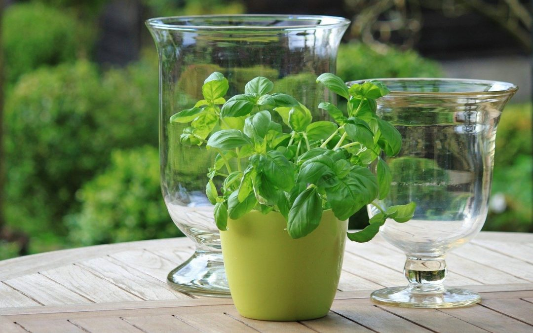 10 Easy Ways to Know Your Plant Needs to be Repotted