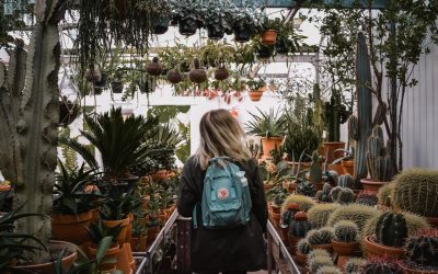 Plant Shopping: How to Choose a Healthy Plant
