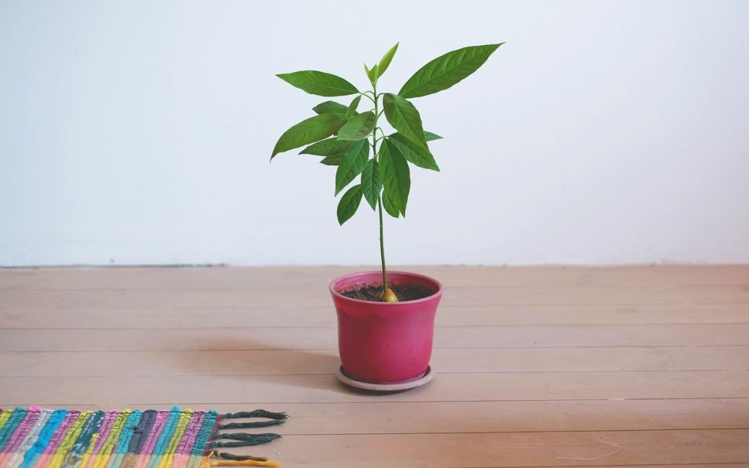 How to Root and Grow an Avocado Tree from a Store-Bought Avocado