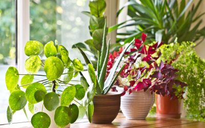 Want to master houseplant care? Here's the most important thing you need to know.