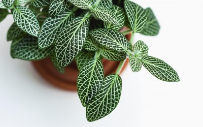 The 4 Non-Negotiables Every Plant Needs to Thrive in Your Home